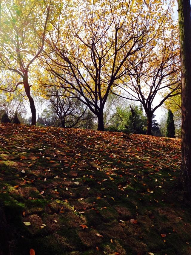 贵阳的秋叶